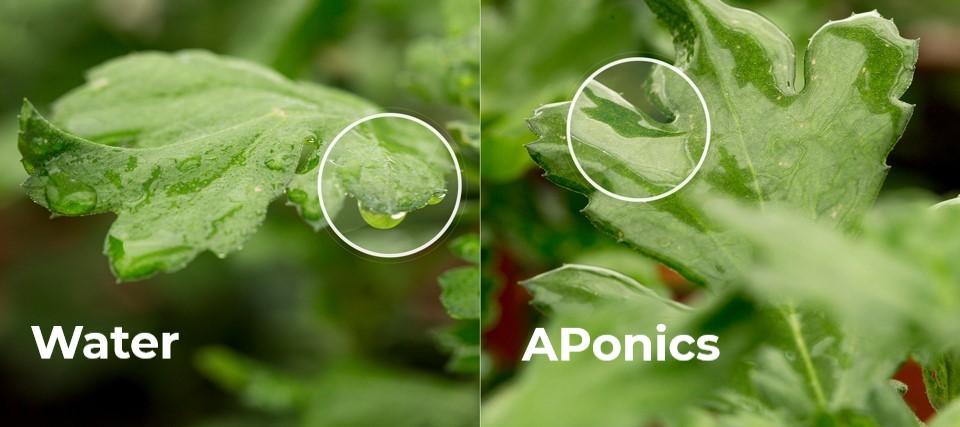 APonics